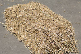 Pea Straw - Bale picked up