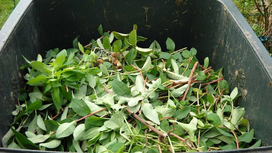 Green Waste Recycling-384